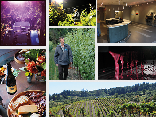 collage of 7 photos from the vineyard, winery and tasting room